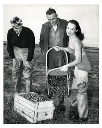 Beauty Queen Harvesting Cranberries