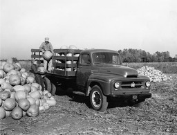 Hauling Pumpkins with an International R-160 Truck