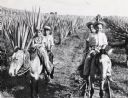 Children Riding Mules on Sisal Plantation