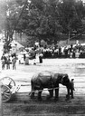 Capitol Park and Circus Parade