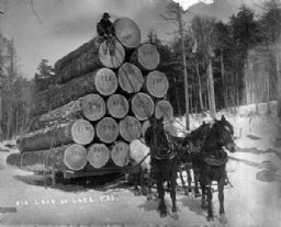 Big Load of Logs
