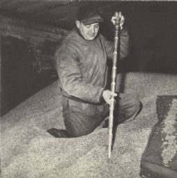 Man Sampling Malt for Testing