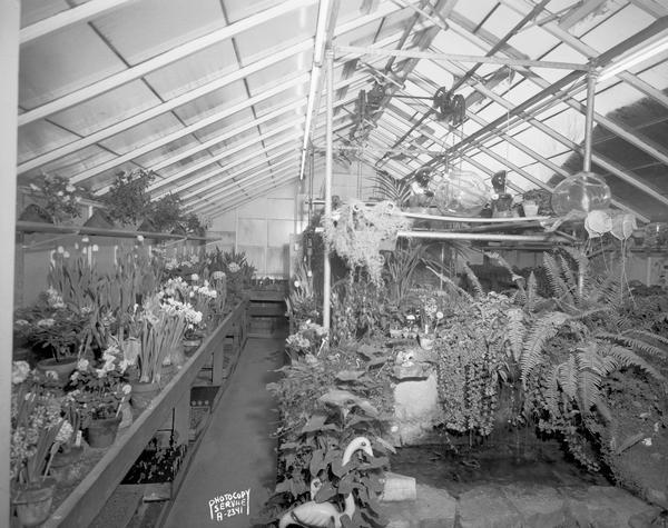 Schade & Cecelia Mullin's Flowers, 1044 South Park Street,. Interior view of the greenhouse showing potted plants.
