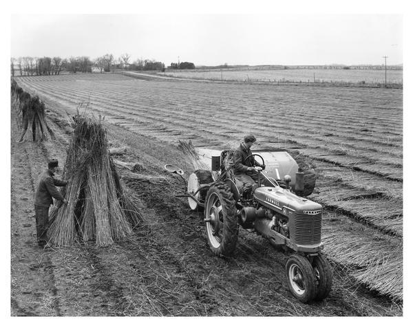 Elevated view of two men harvesting hemp using a McCormick Farmall H tractor and hemp binder No.2. In the background are houses among trees.