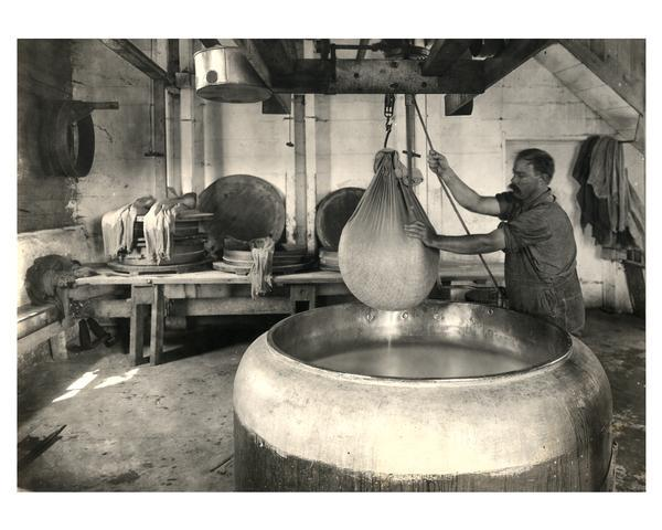 A worker at the Jorden Cheese factory dips curd to make swiss cheese.