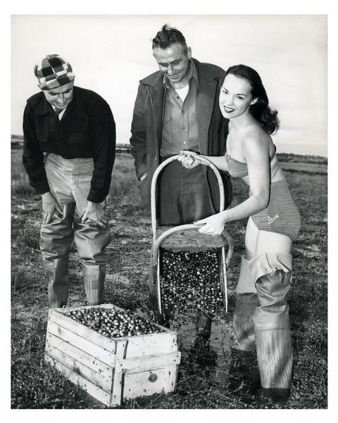 A young woman dressed in a bathing suit and wading boots poses for a promotional photograph for the Wisconsin cranberry industry at Thunder Lake Marsh.  Two cranberry farmers watch.