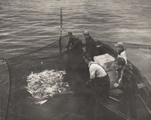 Three fisherman in a boat pulling in a net full of fish on Chequamegon Bay while a man and a boy look on.
