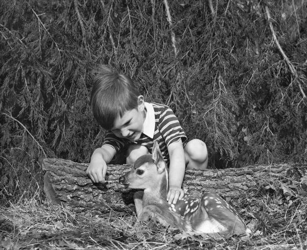 Young boy petting a fawn deer.