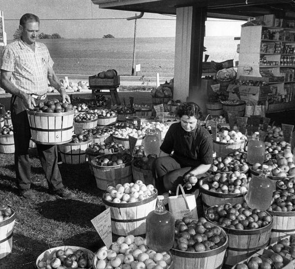 Couple arranging varieties of apples and jugs of cider at their roadside stand near Mukwonago.