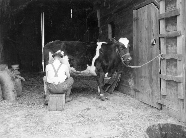 Man sitting on a crate milking a cow by hand inside a barn on the farm of Hal Ament.