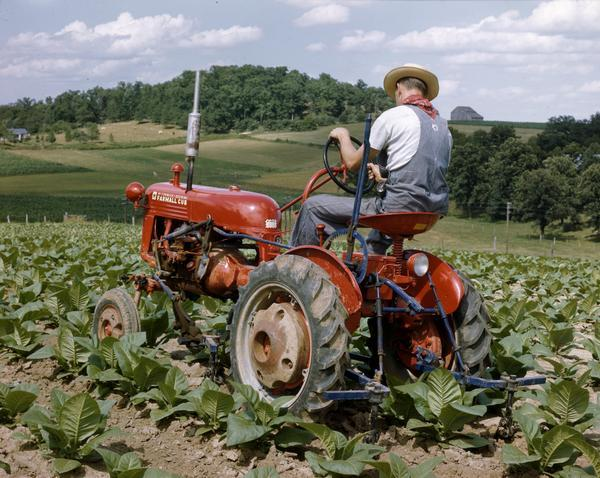 Color photograph of a farmer in a tobacco field on a McCormick-Deering Farmall Cub tractor with attached cultivator.