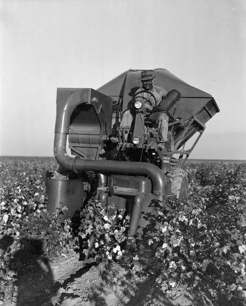 Farm worker, Frank White, stops harvesting to pose with watermelon found among the cotton crop. The field, part of the O'Neill Ranch located in Helm, California, was formerly used for watermelons. Mr. White is sitting in a McCormick-Deering cotton harvester.