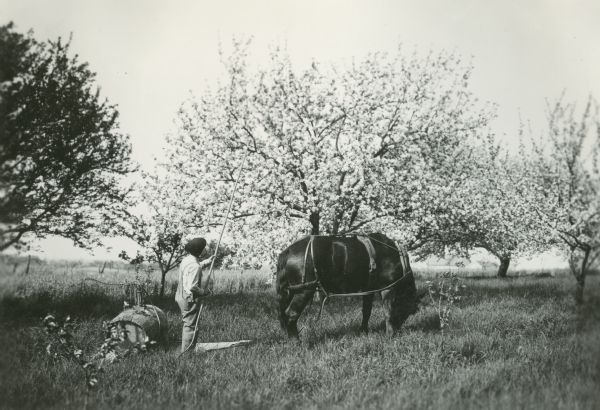A man using a barrel sprayer to apply pesticide to a fruit tree on Prof. Holden's farm.