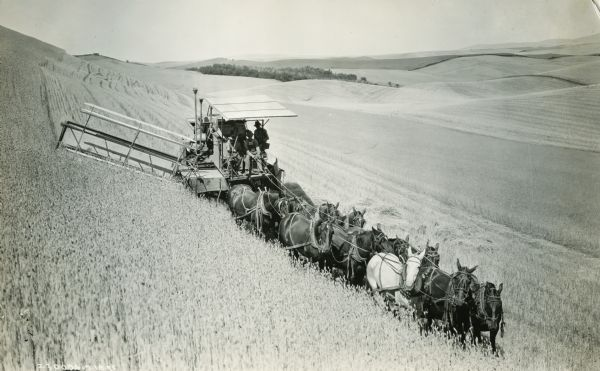Harvester-Thresher (combine) on a hill in a field drawn by a team of eleven horses.