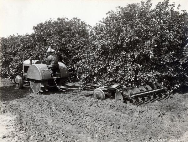 John Niles operating a McCormick-Deering 10-20 orchard tractor with a disk harrow attachment in a grapefruit orchard.