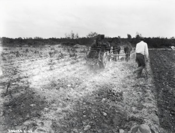 Potato digger drawn by three horses in field near a man wearing a white shirt with collar and boater hat. A wire basket full of potatoes and a bushel basket with potatoes and hat(?) are in the foreground.