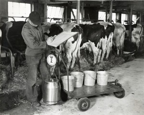 A man writes information on a chart as he weighs a can of milk in a barn. A row of cows standing in stalls is behind him. The man may be working at International Harvester's experimental farm at Hinsdale, Illinois.