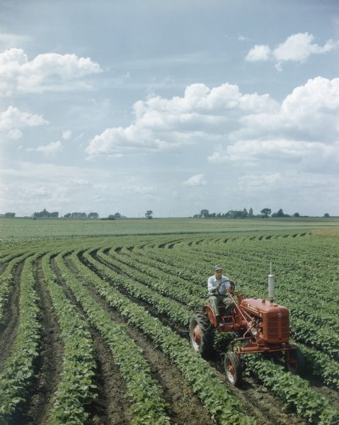 Slightly elevated view of a man on a Farmall Super A tractor following a curving line of furrows in a field with a cultivator.