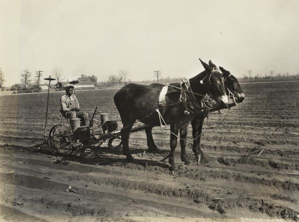 Young man sitting in a planter drawn by two mules on the plantation of Mrs. William H. Stovall.