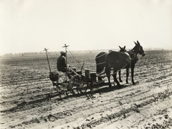 Young African-American man sitting on a P&O planter pulled by mules on the plantation of Mrs. William H. Stovall.