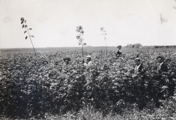Six men, all wearing hats, stand in a field of hemp at Beebe Farm. The seventh man, Prof. Holden, sits on a horse behind the others.