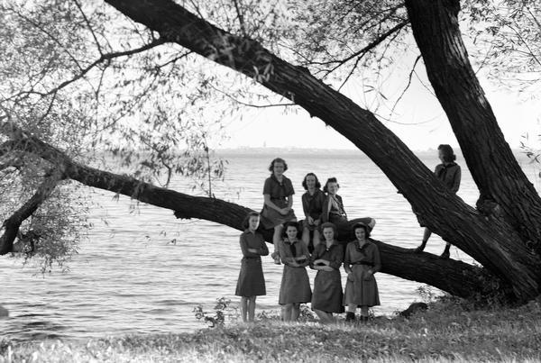 Eight Girl Scouts are standing on and near a tree at the edge of Lake Mendota, with the Madison skyline in the background at Camp Indianola.