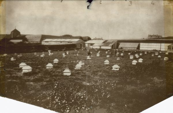 A portion of Simmins' home apiary. Two men working with bees, plus a few buildings, which are (from left to right): the factory, the apiary workshop, the experimental room and the house in the distance.