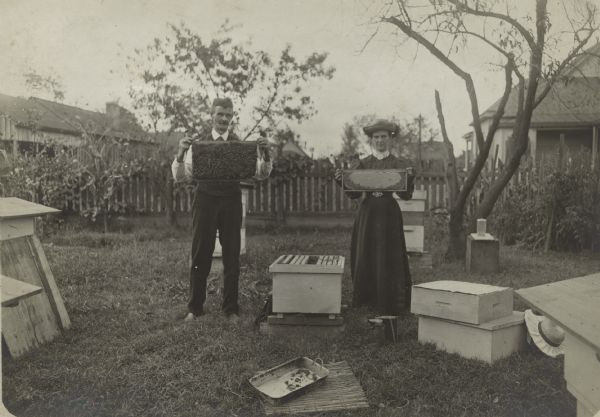 A man and woman hold up slates of honey comb covered in bees.