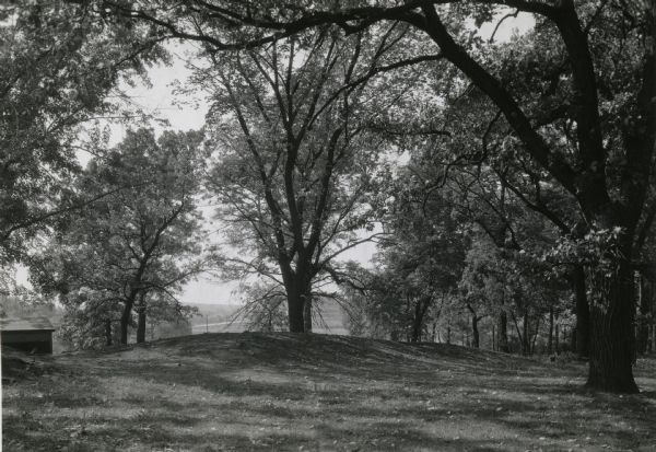 An unusual burial mound in the Willow Drive mound group on the University of Wisconsin-Madison campus, prior to its excavation by Charles E. Brown.