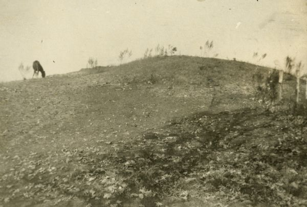 A horse grazes near Native American burial mounds on the Dividing Ridge between Lakes Monona and Wingra in Madison, Wisconsin. The mounds, and the ridge they stood on, were subsequently quarried away by gravel miners.