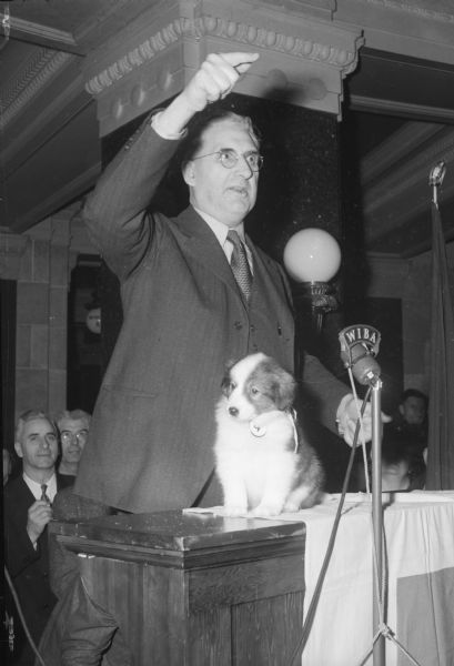 Senator Jess Miller auctioning a Collie puppy in front of a WIBA microphone in the Wisconsin State Capitol. Governor Goodland donated the proceeds of the sale, $325, to the Red Cross mobile disaster unit.