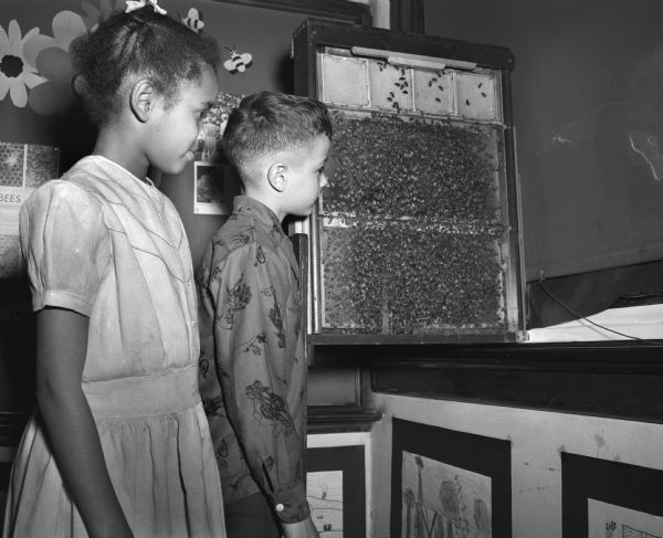 Two fourth graders at Lincoln School, Freddiemae Hill, left, and Russell Allen, Jr, right, are observing 10,000 bees that are preparing for winter in their school classroom. Their science teacher, Evelyn Hahn, started her class project by having a beehive set up in a corner of the classroom so students could observe the tasks of different types of bees in a hive.