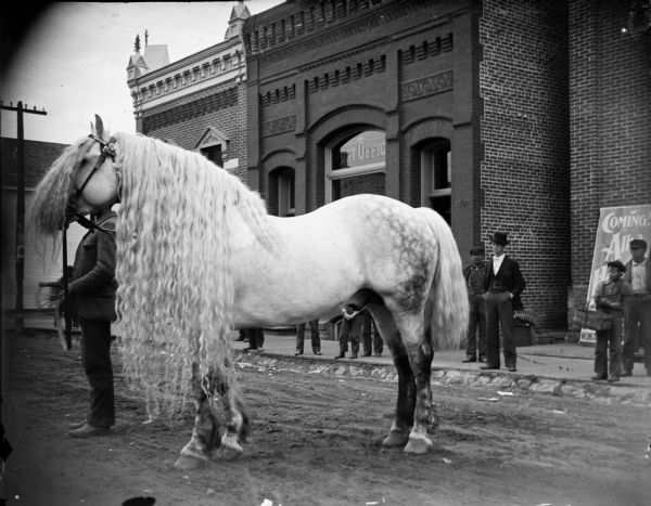 A stallion with long curly mane, owned by Jack Allison. Allison, a horse dealer from Taylor County, and the horse stand in front of the Post Office on Main Street.