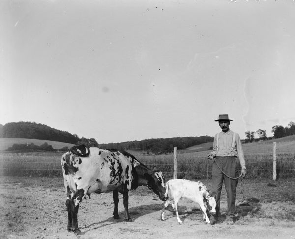 Man with Calf and Cow | Photograph | Wisconsin Historical Society