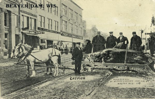 "Six men wearing black jackets and hats stand proudly in front of a giant catfish. The catfish rests on the bed of a horse-drawn sled. The text in the upper left corner reads ""Beaver Dam, Wis."" The scene takes place on a commercial street, which includes a candy shop."