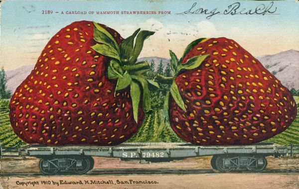 "Photomontage of two giant strawberries on a flatbed railroad car.  Fields and mountains fill the background. Red text in the upper portion of the image reads, ""2189 - A Carload of Mammoth Strawberries From ______."" The S.P. marking on the side of the car shows that it is on the Southern Pacific Railroad line."
