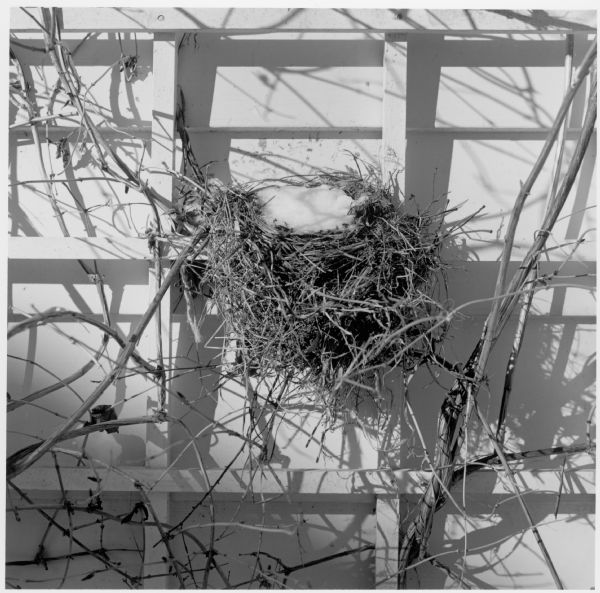 Bird nest on the side of the Quinney house at 345 Rolfe Road.