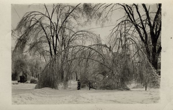 Winter scene with tree branches bowing under the weight of snow.