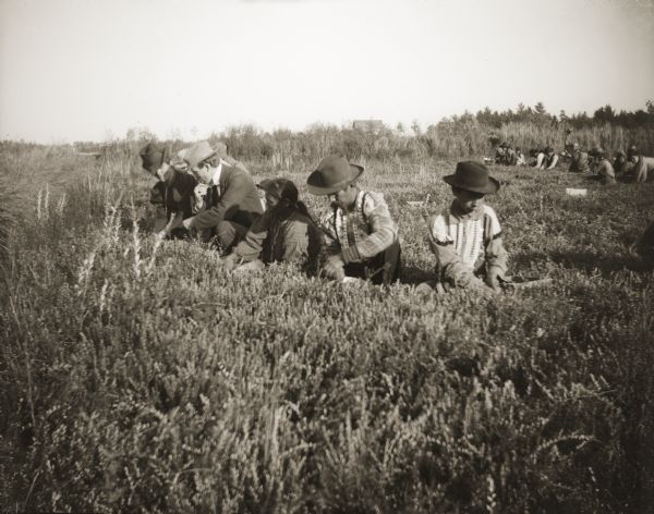Two Ho-Chunk men wearing beaded shirts are gathering cranberries (hoocake) alongside a Ho-Chunk woman and a white man and woman. A large group of cranberry harvesters are in the background. The men must have been told in advance that a photographer was coming to take pictures, otherwise they would have never worn beaded shirts to work.