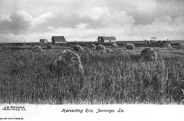 "View of a field of rice being harvested. A team of horses can be seen pulling agricultural equipment, and several houses/outbuildings can be seen in the distance. Text on photograph reads: ""Harvesting Rice, Jennings, La."" and ""V.B. Richard Jennings, La."""