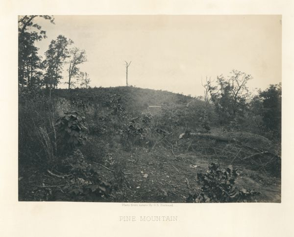 Pine Mountain with a lone, bare tree on top. Trees and shrubs are in the foreground. Plate 30
