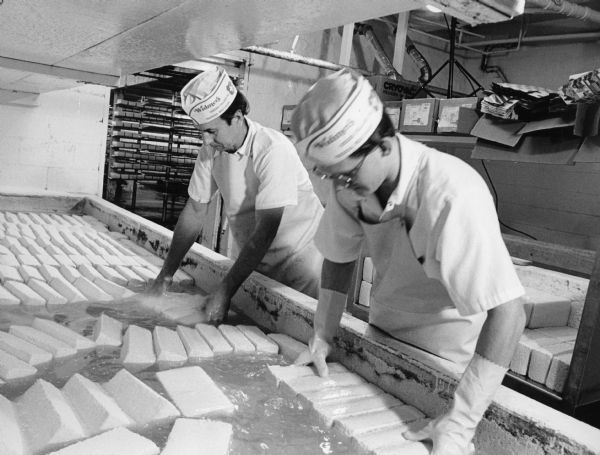 Cheesemakers remove loaves of Brick Cheese that have been floating in the salt brine tank for 14 hours.