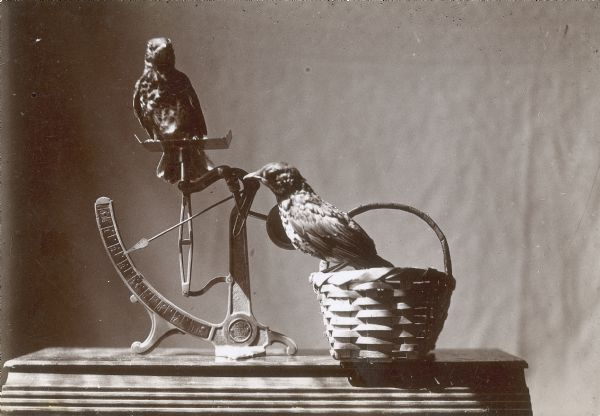 Two juvenile robins are posed on an egg scale and basket.