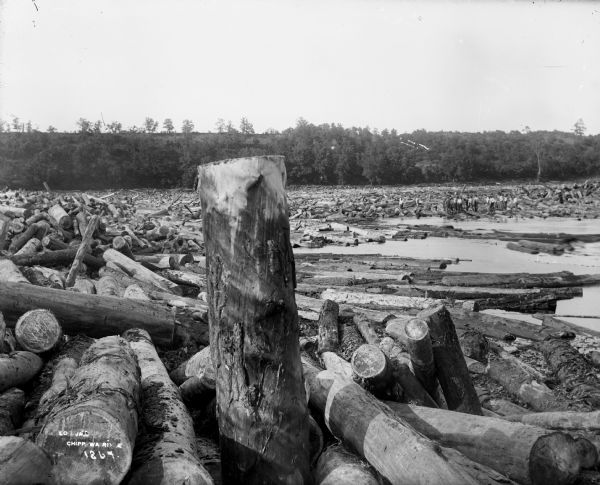 Large log jam on the Chippewa River. In the distance a group of men stand atop the jammed logs.