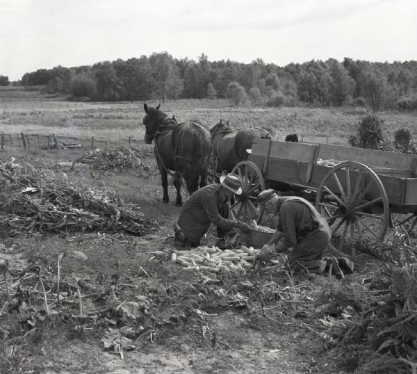 Two farmers kneel in a field picking corn and to load it into the open back of a horse-drawn wagon. Corn stalks and leaves litter the ground around the farmers. Tall grass and trees are visible in the background past a fence.