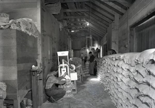 Two men in barn use corn bagging machines to fill and seal canvas bags of seed corn. One kneels next to a machine to the left filling the bags while another stands in the background sealing. A long row of filled bags lay against a wall on the right.