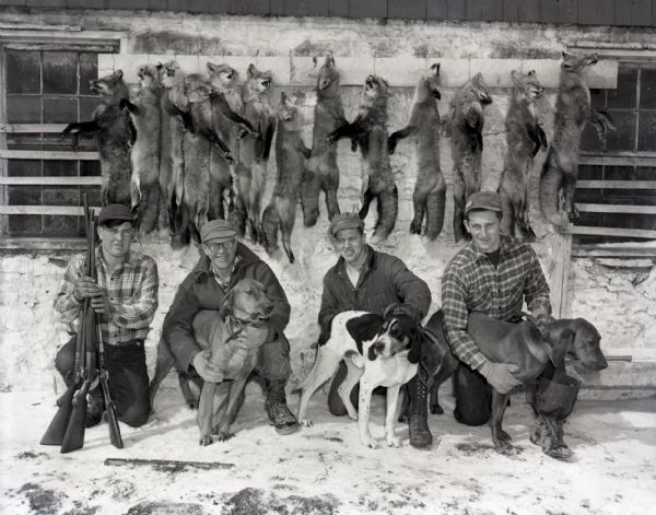 Group portrait of men after a fox hunt. Four men kneel on the ground next to their hunting dogs and rifles. The men are clad in heavy boots, gloves, and cold weather attire. Thirteen dead foxes hang on the wall behind the men.