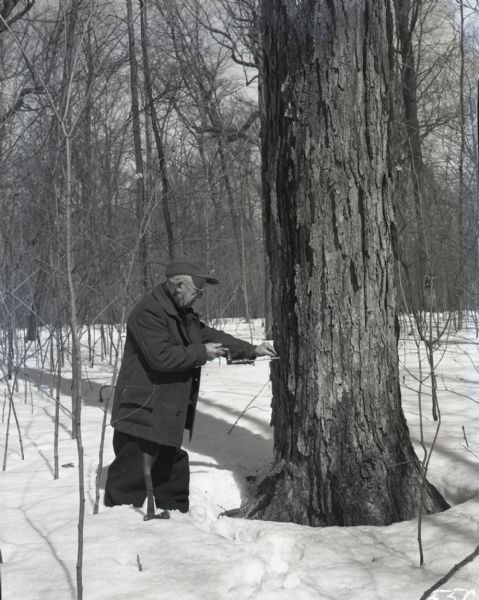 Harvey Blue standing in the snow and drilling a hole in a tree for maple syrup using a hand-drill. There is an axe resting in the snow next to him. Image taken off of Old Highway 10, now Highway 96, in Outagamie County, between Dale and Medina.