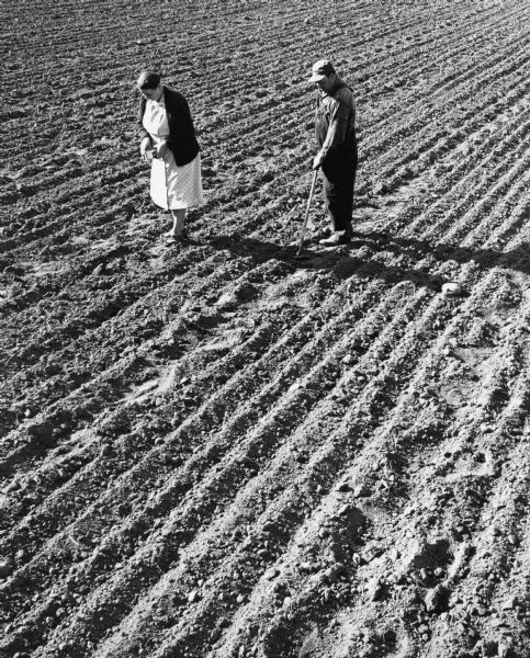 """Ben & Catherine Adelmeyer tend their potato crop in a field that abutted Henni & Wisconsin Streets."""