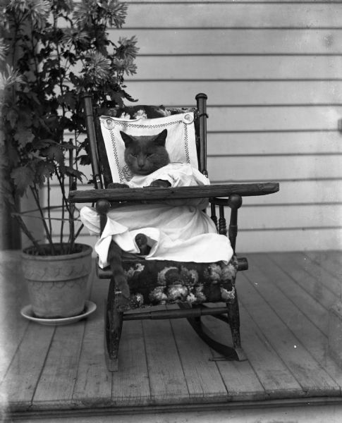 "Jennie and Edgar Krueger's cat Tramp dressed up in old boys' clothes and sitting in a rocking chair. The cat has its paws on a board that has been placed over the arms of the chair. Two pins holding a piece of cloth against the back of the chair read: ""Compliments of Santa Claus at Racek's,"" and bear a likeness of the face of Santa Claus."